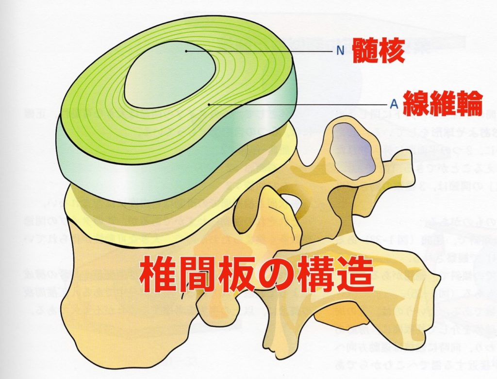 椎間板の構造