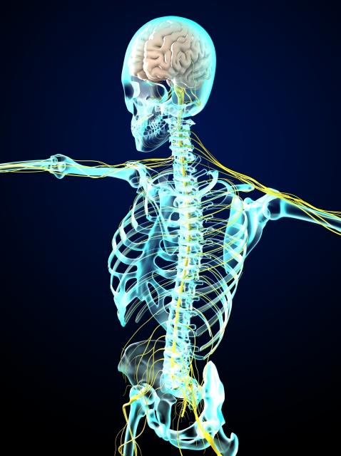 神経のメカニズム