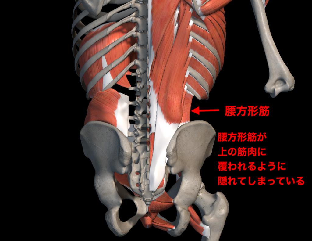 骨盤周りの解剖図
